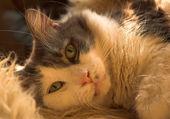 Een kat — Stockfoto