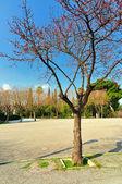 National Gardens of Athens — Stock Photo