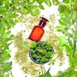 Stock Photo: Bottle with homeopathy balm and wood plants