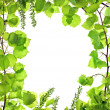 Frame of green asp leafage — Foto Stock #12814910