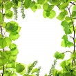 Stock Photo: Frame of green asp leafage