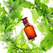 Bottle with homeopathy balm and wood plants — Stock Photo #12815093