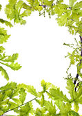 Frame of green oak leafage — Stock Photo