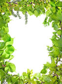 Frame of green plants — Stock Photo