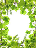 Frame of green asp leafage — Stock Photo