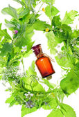 Bottle with homeopathy balm and wood plants — Stock Photo
