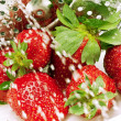 Stock Photo: Strawberry and drops of water