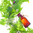 Bottle with homeopathy balm and wood plants — Stock Photo #12864350