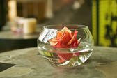 Button of rose in vase with water — Stock Photo