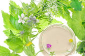 Cosmetics and herb — Stock Photo