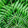 Bracken — Stock Photo #12723649