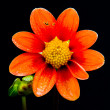 Orange and yellow flower — Stock Photo