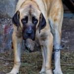 Sad Dog — Stock Photo #13650785