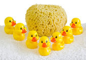 Rubber ducklings — Stock Photo