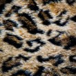 Leopard skin texture — Stock Photo #21163231