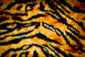 Tiger skin texture — Stock Photo