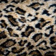 Stock Photo: Leopard skin texture
