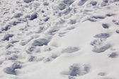 Footprints in the snow — Stock Photo