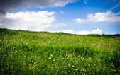 Meadow and clouds — Stock Photo
