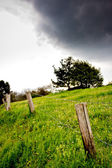 Fence, tree and clouds — Stock Photo
