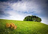 Oso de peluche — Foto de Stock