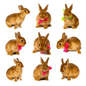 Bunnies — Stock Photo