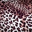 Leopard texture — Stock Photo #38396619