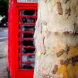 Red phone booth — Stock Photo #39377829