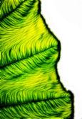 葉の上のアートのパターン. — ストック写真