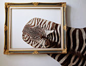 Zebra leather — Stock Photo