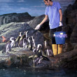 Stock Photo: Penguin feeding