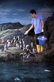 Penguin feeding — Stock Photo