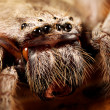 Huntsmspider — Stock Photo #15360773