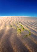 Sand dune growth — Stock Photo