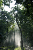 Sunbeam shine through thicket of Tree — Stock Photo