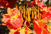 Exotické flóry — Stock fotografie