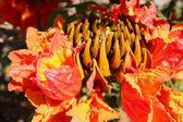 Exotic flora — Stock Photo