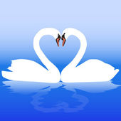 Two white swans with love — Stock Vector