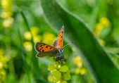 Orange butterfly on the grass — Stok fotoğraf