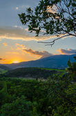 Panorama of vineyards on the sunset — Stock Photo