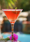 Tropical Cocktail Poolside — Stock Photo