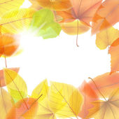Autumn background with maple leaves. plus EPS10 — Stock vektor