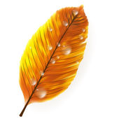 Autumn leaf isolated on white. plus EPS10 — Stock Vector