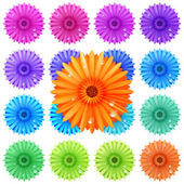 Gerbera flower set isolated on white. plus EPS10 — Stock Vector