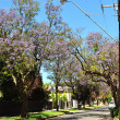 Little suburban street full of green trees. Adelaide, Australia — Stock Photo #30941671