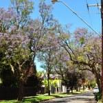 Little suburban street full of green trees. Adelaide, Australia — Stock Photo