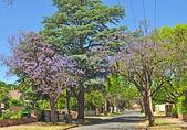Little suburban street full of green trees and blooming jacaranda. Adelaide, Australia — Stock Photo