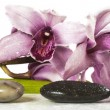 Orchid and stones on white background,white background - Stock Photo