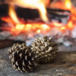Pine cones — Stock Photo #16653549