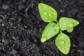 Green sprout — Stock Photo